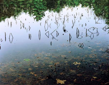 Image from Water and Woods: Intimate Wanderings