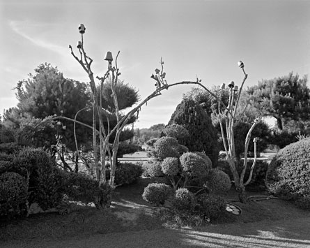 Image from Places For The Spirit: Traditional African American Gardens